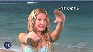MERMAID MINUTE #3 Learn about Crabs! Hermit Crabs, Fiddler Crabs, Japanese Spider Crabs and more!