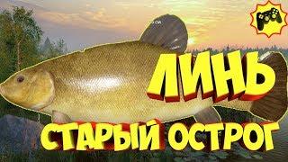 русская рыбалка 4 фарм Старый Острог Линь рр4 russian fishing 4 Алексей Майоров