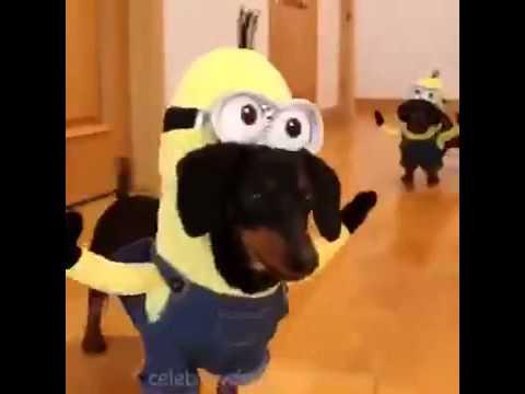 minions dragt til hund