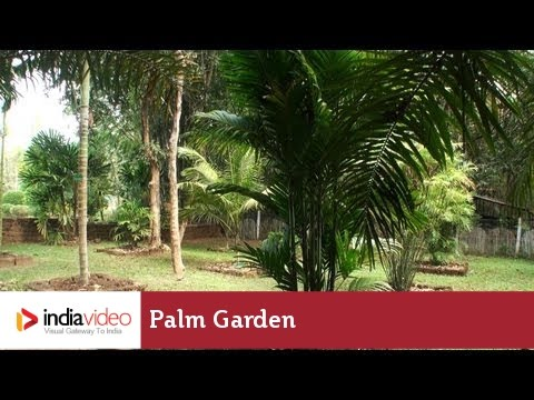 Palm Garden in Nilambur