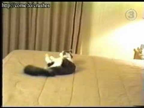 Stupid Cat Runs into Wall