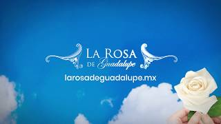 ¡Disfruta de todos los capitulos completos de La Rosa de Guadalupe en el Sitio Oficial!