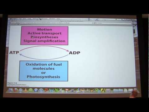 #20 Biochemistry Metabolic Controls/Energy Lecture for Kevin Ahern's BB 450/550