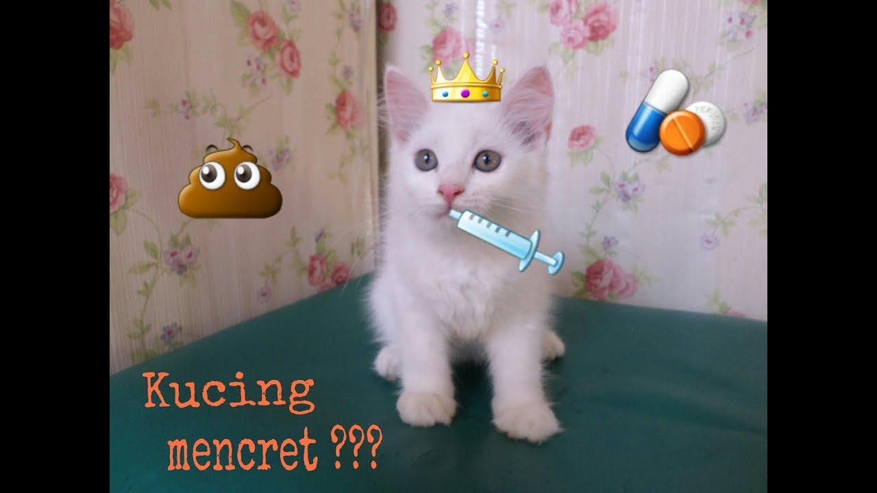 Cara Ampuh Dan Cepat Mengatasi Kucing Mencret Cat2 Youtube