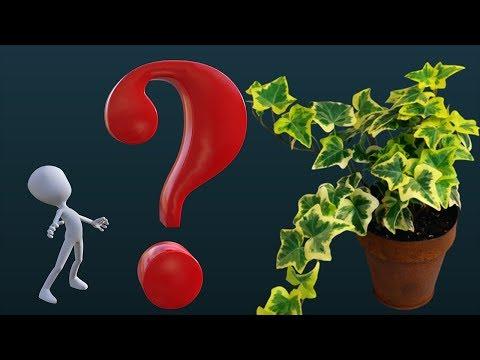 Что делают и чем занимаются комнатные растения в вашем доме???