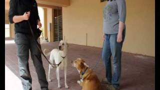 Clicker Training On Canine Aggression