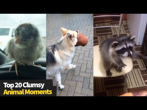 Top 20 Funny Animal Fails | Clumsy Animal Moments
