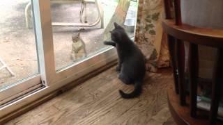 Smoky the Kitten & Mr. Squirrel