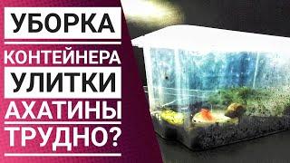 Как ухаживать за улиткой: Уборка контейнера    Улитка Ахатина   Трудно или легко?