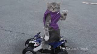 СМЕШНЫЕ КОШАЧЬИ ГОНКИ / FUN CAT'S RACES
