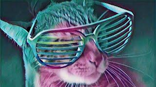 Avakin Life клип - кошки поют mp.4