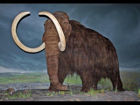 5 Extinct Animals That May Still Exist