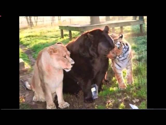au dela des mots 09 01 2014 Communication et magnétisme avec les animaux