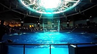 Dolphin Show at Shinagawa Aquarium