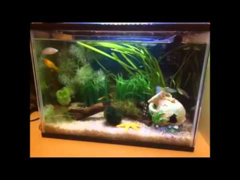 Peces y plantas para acuarios peque os con acuarios esp for Comida para peces tropicales acuario