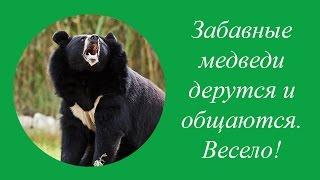 Новосибирский Зоопарк. Забавные медведи весело общаются и дерутся.