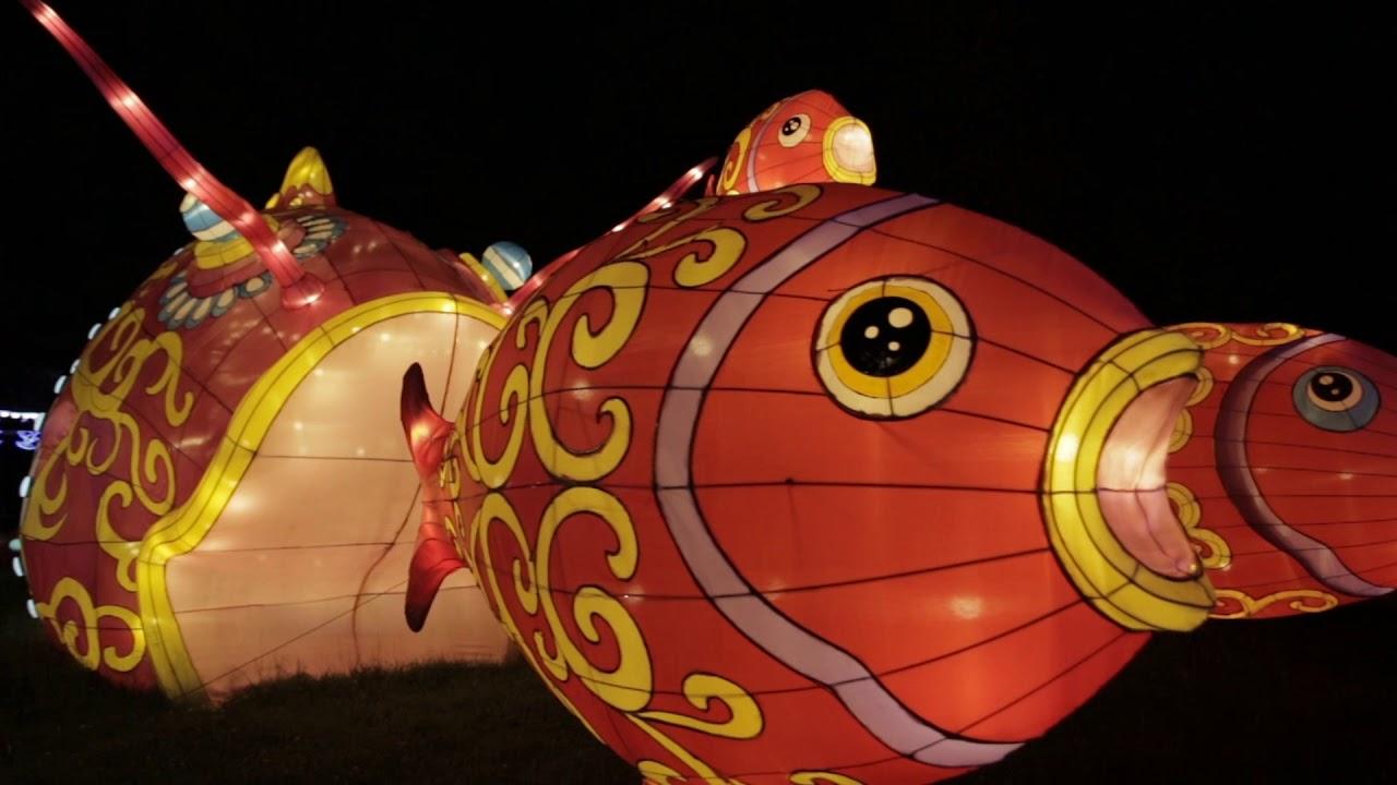 Zoo Köln China Light