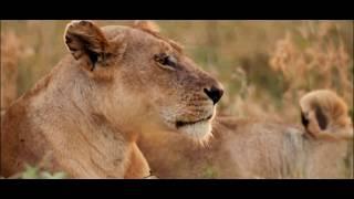 Лев,тигр,леопард,ягуар.Best kids TV. Мир животных,представители рода пантера.