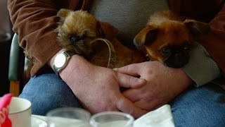 Speed dating for dogs - Choose the Right Puppy for You: Episode 2 Preview - BBC Two