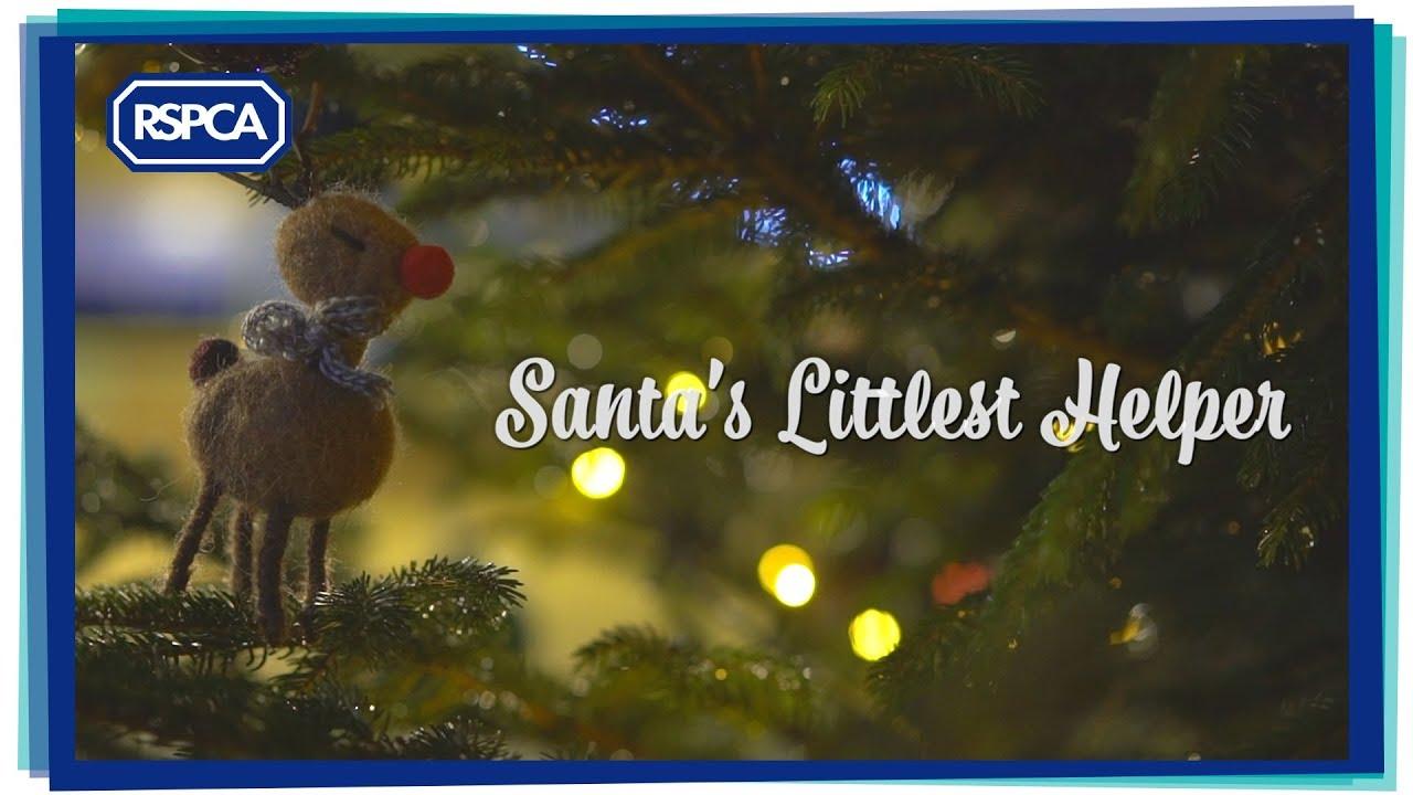 RSPCA Christmas advert 2019   Santa's littlest helper   YouTube