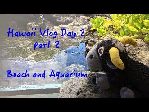 Hawaii Vlog Day 2 part 2: Beach and Aquarium