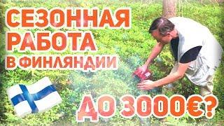 Работа в Финляндии. Сколько  можно заработать на лесной ягоде?