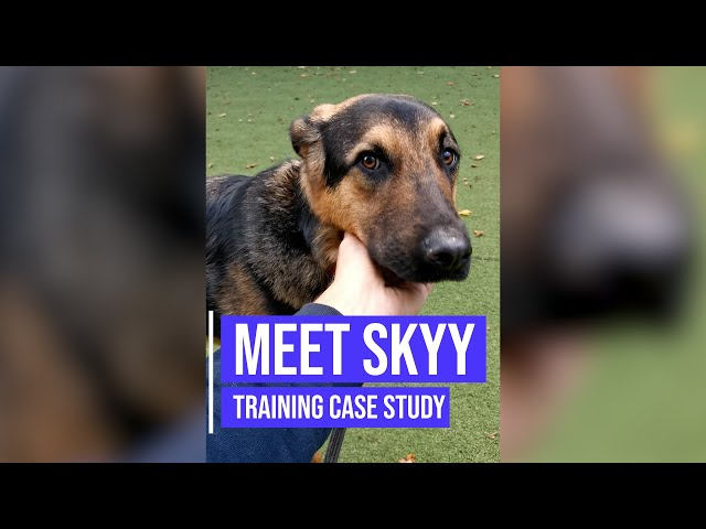Helping a rescue German Shepherd cross breed with aggression issues