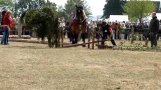Zrywka drewna - Detmold 2009 (PferdeStark)