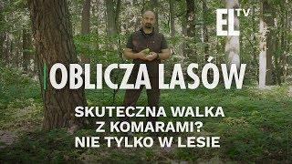 Skuteczna walka z komarami? Nie tylko w lesie | Oblicza lasów #81