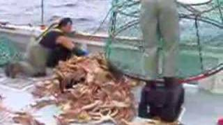 Emptying and sorting Snow Crab Trap