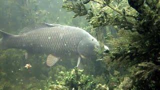 Подводная охота: Описываю тактику подводной охоты в залежке и косвенные признаки присутствия рыбы.(