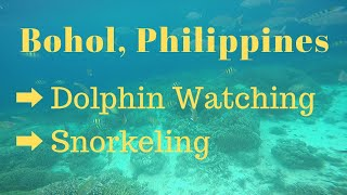 Dolphin Watching | Snorkeling | Bohol, Philippines