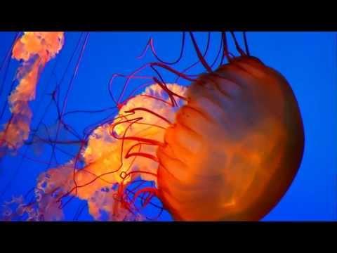 Экзотические медузы - очень красивое видео