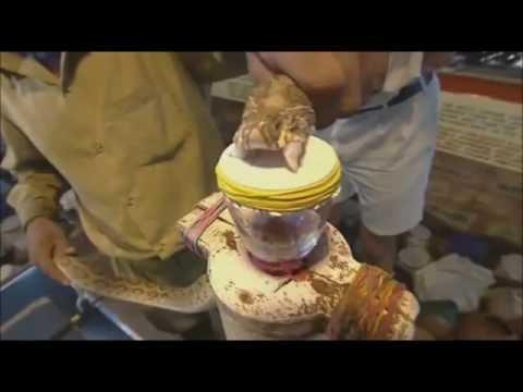 【観覧注意】猛毒ヘビの毒を人間の血液に入れたら大変な事態に!?