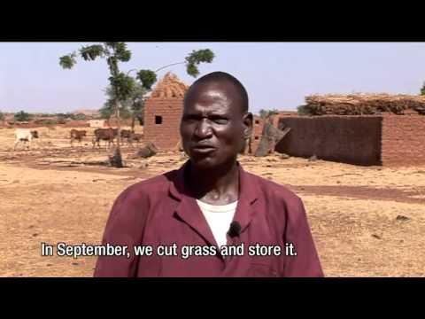 Ganame Ousseni - Ninigui village (Yatenga province), Burkina Faso