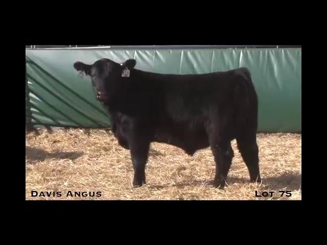 Davis Angus Lot 75