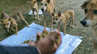 Thin little puppies and mother dog so hungry  Feeding time  Dogoftheday