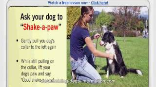 Dove Cresswell's Puppy & Dog Training Online