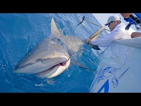 Searching for Wahoo and Monster Shark Fishing with Frogg Toggs - 4K