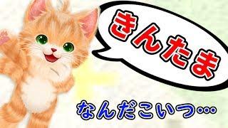 とんでもないことを喋るネコが面白すぎる