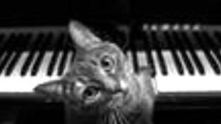 Frank Mills - Kitty On The Keys