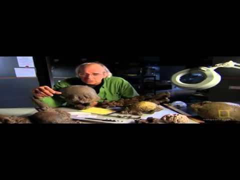 DINOSAUR DISCOVERY   AMAZING DINOSAURS DOCUMENTARY  HD Documentary
