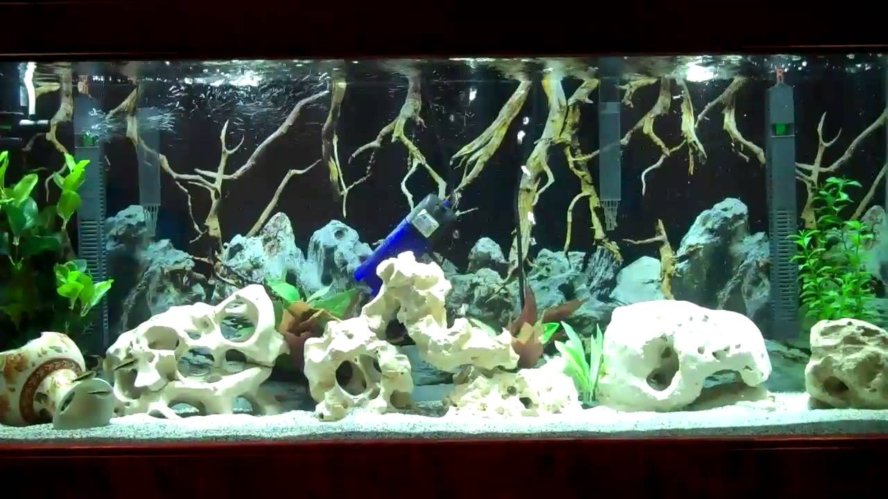 Using texas holey rock as air stone for aquarium youtube for Rocks for fish tank