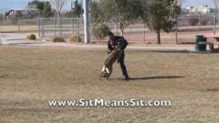 Dog Training School- K9 Dog Training Video