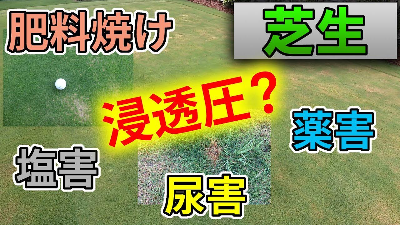 【芝生】肥料焼け・尿害・塩害・薬害のメカニズム【浸透圧】