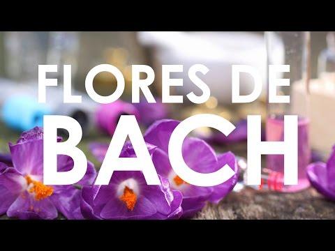 ¿Como es la terapia con flores de Bach?