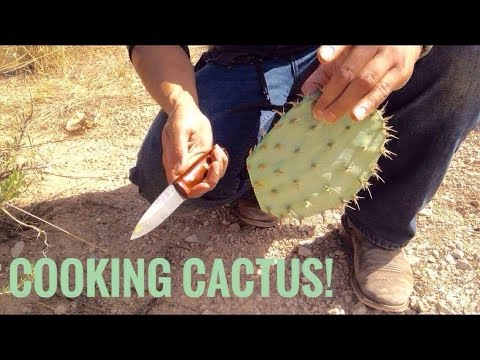 Desert Survival Food: Prickly Pear Cactus (Nopales)