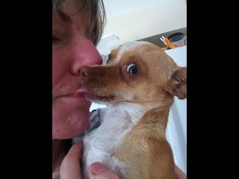 Incredible Before & After Dog Rescue: Sunshine The Chihuahua