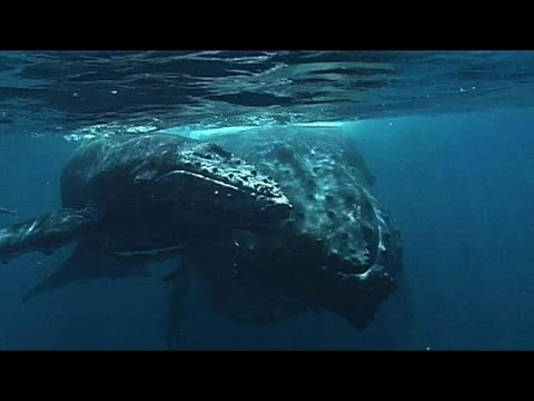 Malagasy festival celebrates arrival of humpback whales