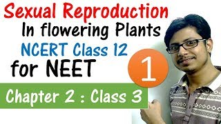 Sexual reproduction in flowering plants class 12 | male reproductive structures | for NEET exam